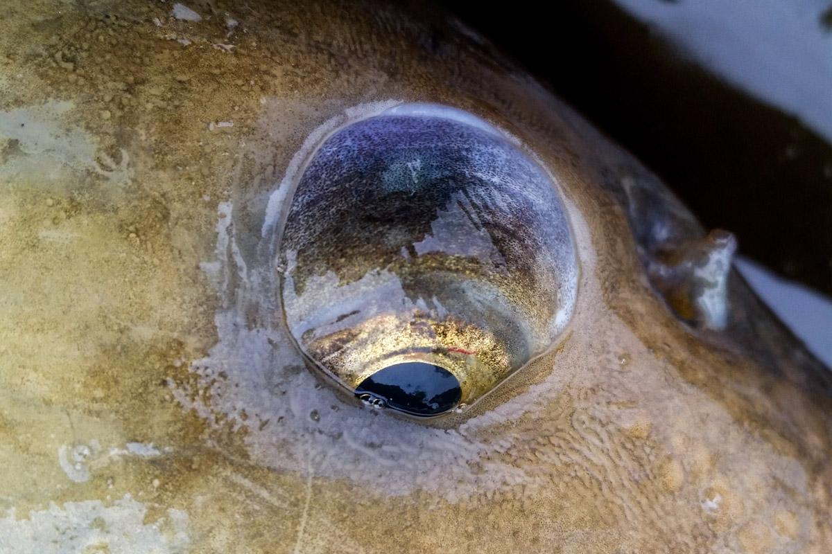 fish vision