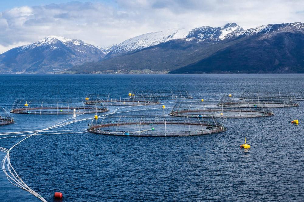 Norwegian salmon farm