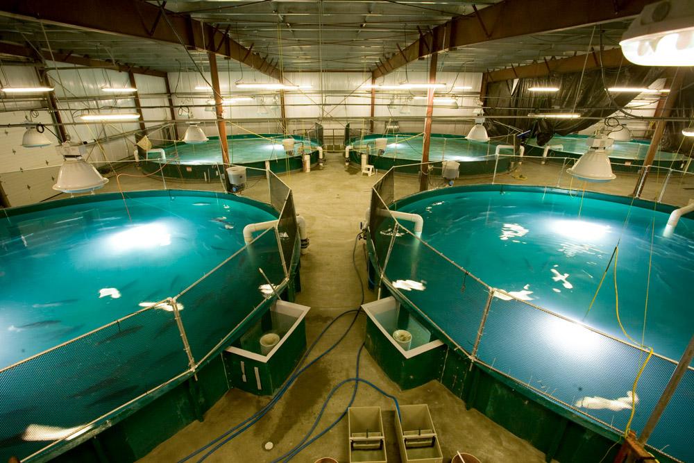 closed containment salmon farming