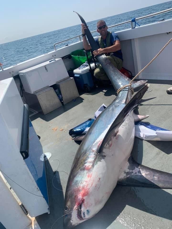 thresher shark Ireland